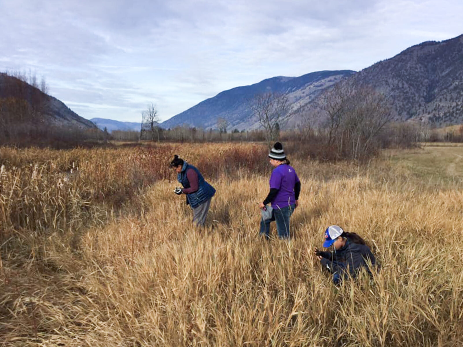 Lower Similkameen people harvesting hemp for Oral Histories Project in B.C.
